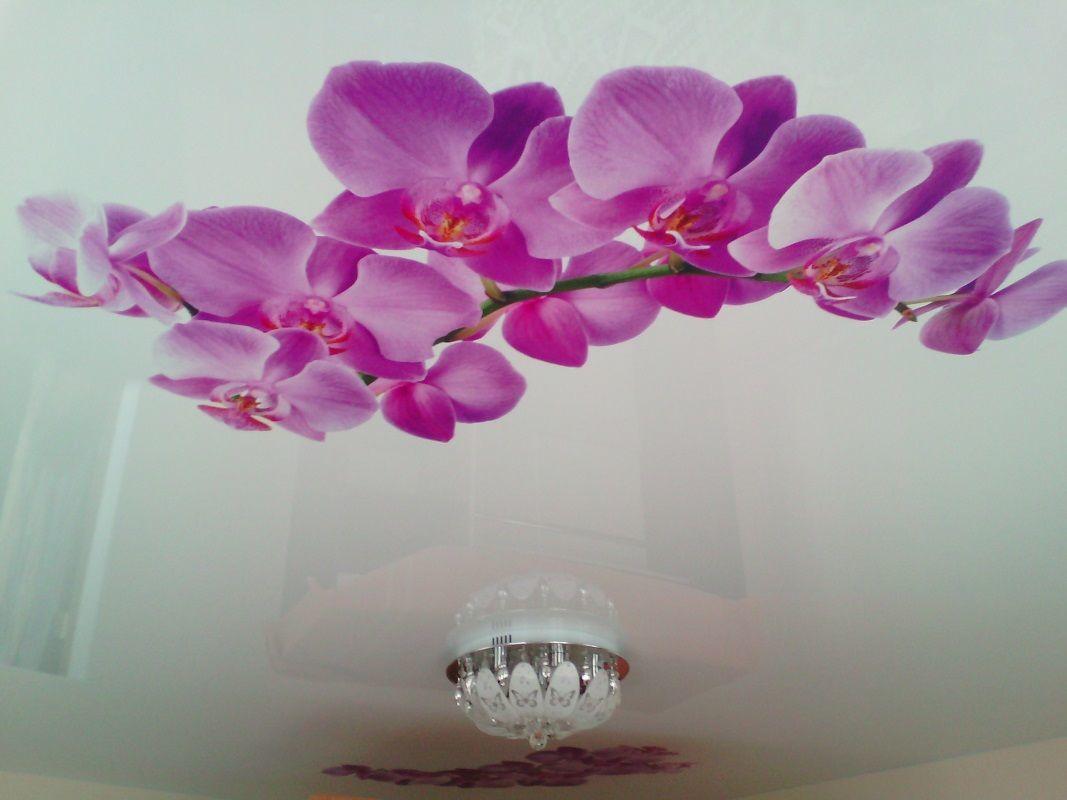 Орхидея фотопечать потолок